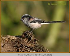 long-tailed-tit-25.jpg