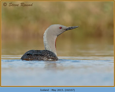 red-throated-diver-107.jpg