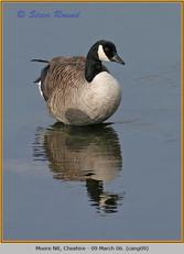 canada-goose-09.jpg