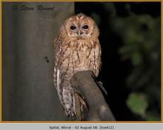 tawny-owl-12.jpg