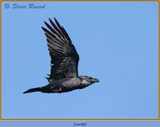 raven-49.jpg
