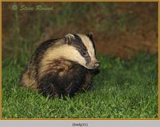 badger-31.jpg