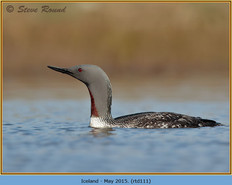 red-throated-diver-111.jpg