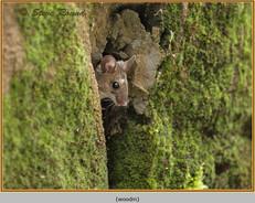 wood-mouse-03.jpg