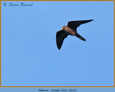eleonoras-falcon-10.jpg