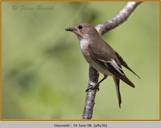 pied-flycatcher-30.jpg