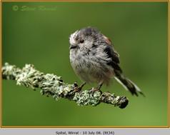 long-tailed-tit-34.jpg