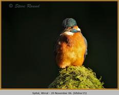 kingfisher-15.jpg