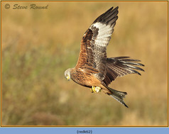 red-kite-62.jpg