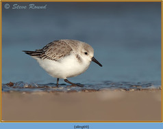 sanderling-69.jpg