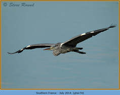 grey-heron-74.jpg