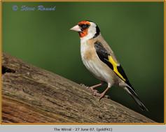 goldfinch-41.jpg
