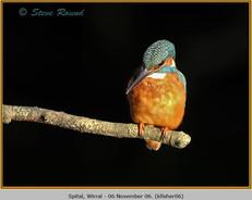 kingfisher-06.jpg