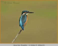 kingfisher-22.jpg