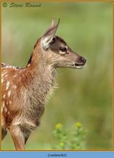 red-deer-82.jpg