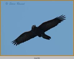 raven-36.jpg