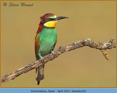 bee-eater-29.jpg