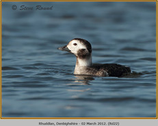 long-tailed-duck-22.jpg