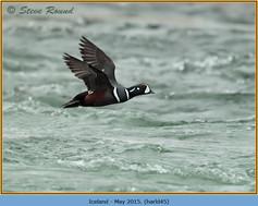harlequin-duck-45.jpg