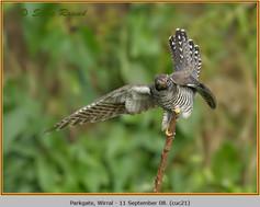 cuckoo-21.jpg