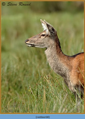 red-deer-68.jpg