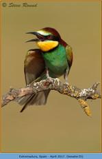 bee-eater-35.jpg