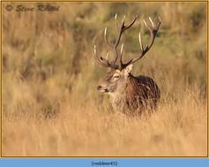 red-deer-45.jpg