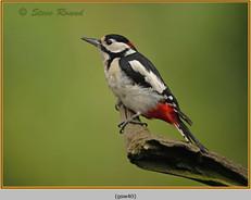 gt-s-woodpecker-40.jpg