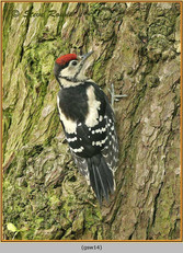 gt-s-woodpecker-14.jpg