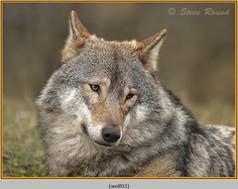 wolf-03.jpg