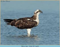 osprey-44.jpg