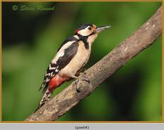 gt-s-woodpecker-04.jpg