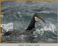 cormorant-08.jpg