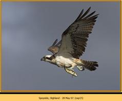 osprey-15.jpg