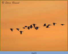 little-egret-64.jpg