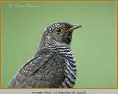 cuckoo-20.jpg