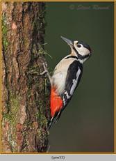 gt-s-woodpecker-33.jpg