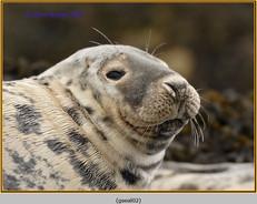 grey-seal-02.jpg