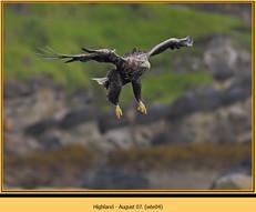 white-tailed-eagle-04.jpg