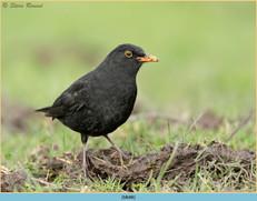 blackbird-88.jpg