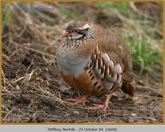 red-legged-partridge-08.jpg