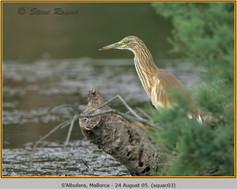 squacco-heron-03.jpg