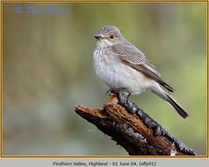 spotted-flycatcher-01.jpg