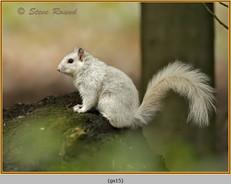 grey-squirrel-15.jpg