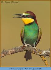 bee-eater-34.jpg