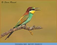 bee-eater-21.jpg