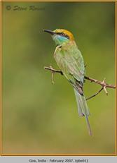 green-bee-eater-01.jpg