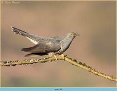 cuckoo-139.jpg