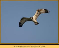 osprey-07.jpg