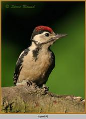 gt-s-woodpecker-18.jpg